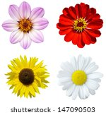 Stock photo collage with colorful flowers isolated 147090503