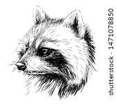 Raccoon. Sketchy  Graphic...