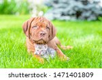 Stock photo mastiff puppy hugging baby bengal kitten on green summer grass empty space for text 1471401809