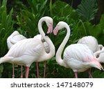 greater flamingo ... | Shutterstock . vector #147148079