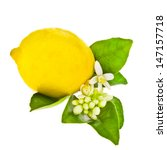 Large Fresh Lemon With Lemon...