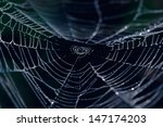 The Spider Web Closeup In A...