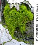 Green Moss Growing Over...