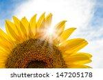 Bright Sun Shines Through The...