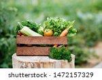 basket full of harvest organic... | Shutterstock . vector #1472157329