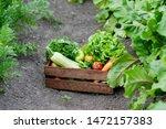 basket full of harvest organic... | Shutterstock . vector #1472157383