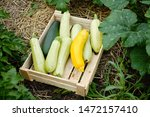 picking freshest squash and... | Shutterstock . vector #1472157410
