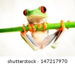 red eyed tree frog 160 ... | Shutterstock . vector #147217970