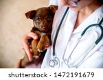 Stock photo the vet examines a puppy in the hospital the little dog got sick puppy in the hands of a veteran 1472191679