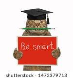 The Cat Teacher In A Square...