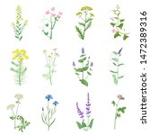 wild herbs color set isolated.... | Shutterstock .eps vector #1472389316
