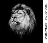 Male Lion In The Zoo   Mono...