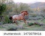 Arizona Wild Horses Are Seen At ...