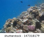 snorkeling in the red sea | Shutterstock . vector #147318179