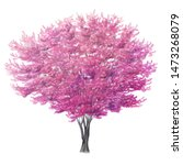 Watercolor Sketch Of A Redbud...