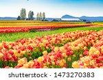 Beautiful Landscape Picture Of...