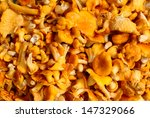 chanterelle mushrooms  is full... | Shutterstock . vector #147329066