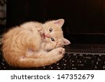 Stock photo kitten playing on the computer 147352679