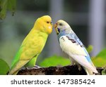 Couple Sweet Beautiful Birds
