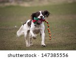 Stock photo dog running with toy in mouth 147385556