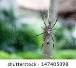 Spider And Spider Web And Its...