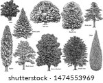 tree collection  illustration ... | Shutterstock .eps vector #1474553969