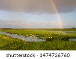 Landscape Onnerpolder, Zuidlaardermeer in the Netherlands. Rainbow over the green lush meadow.