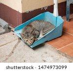 Kitten Cat Sleep In A Dust Pan