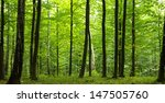 sunlight in the green forest ... | Shutterstock . vector #147505760