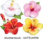 Stock vector set of hibiscus 147514496
