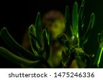 Stock photo blurry bigfoot peaking through plant life against a dark background with colored gels 1475246336