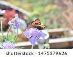 Closeup Butterfly On Purple...