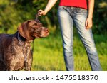 Stock photo dog walker with a dog in the green grass on a sunny lawn 1475518370