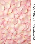 Stock photo pink rose petals valentine s day background flat lay top view 1475677229