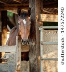 Horse In Stall
