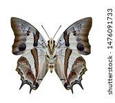 blue nawab  polyura schreiber ... | Shutterstock . vector #1476091733