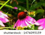 The  Bumblebee On A Flower...