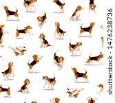 Cute Flat Beagle Puppy In...