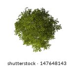 tree from above isolated on... | Shutterstock . vector #147648143