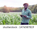 African Farmer Stand In The...