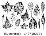 Set Of Leaf Prints. Autumn...