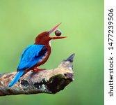 Stock photo beautiful birds in nature blue birds birds wallpapers baby birds kingfisher hd image 1477239506