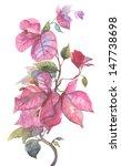 Bougainvillea Pink Flower