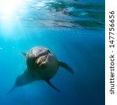 Tropical Marine Life With Wild...