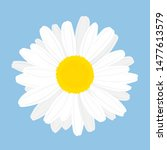 chamomile flower. top view.... | Shutterstock .eps vector #1477613579