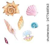 Watercolor Seashells On White...