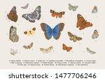 Butterflies. Set Of Elements...
