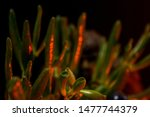 Stock photo blurry bigfoot peaking through plant life against a dark background with colored gels 1477744379