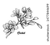 orchid branch hand drawn vector ... | Shutterstock .eps vector #1477844699