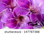 Beautiful Gladiolus Flower...